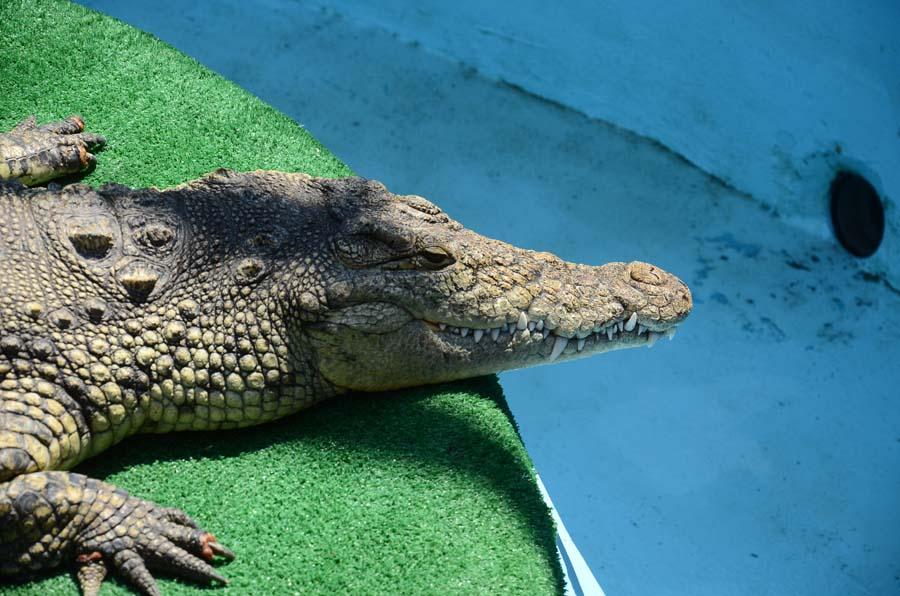 Крокодилий каньон