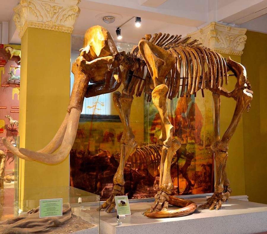 Музей природы Алматы