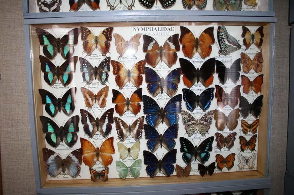 Выставка «Бабочки и рептилии»