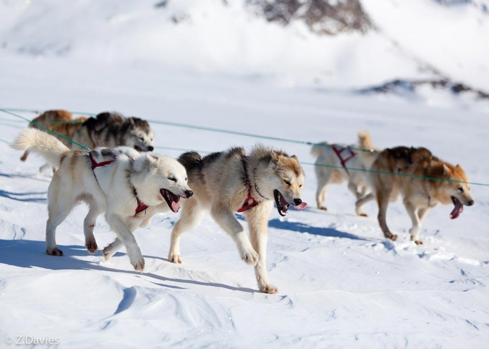 Собаки в усадьбе Тюрюминых